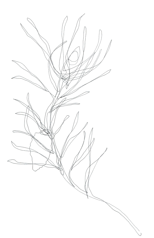 LisaPock_Zeichnung